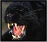 EHS_Panther